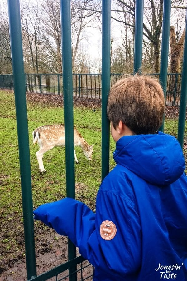 a boy in a blue jacket looks through a fence at a deer