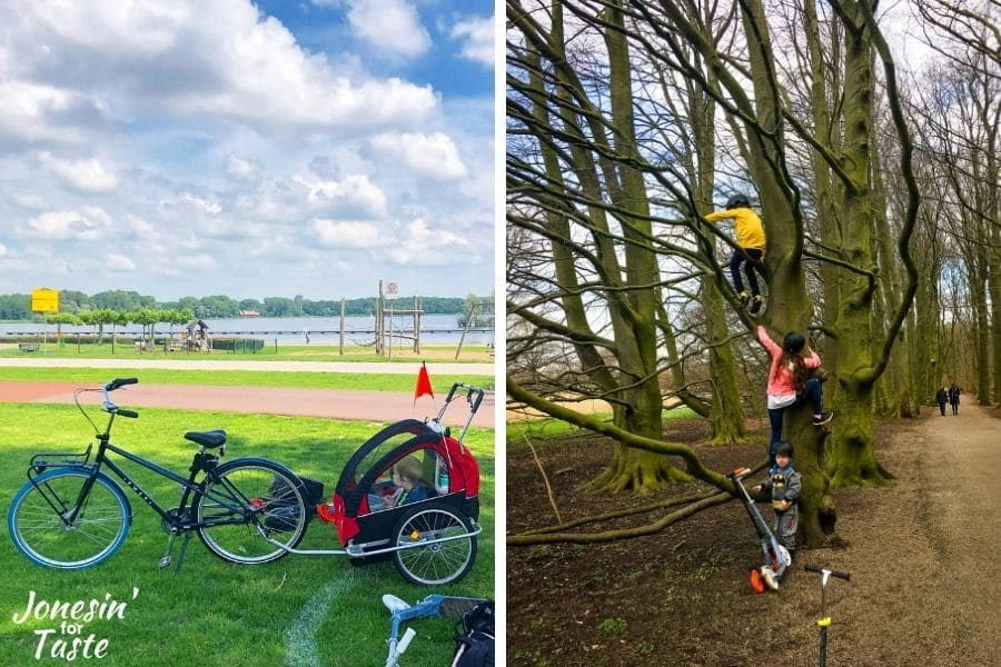 a collage graphic of a bike and trailer in a park and 2 children climbing a tree